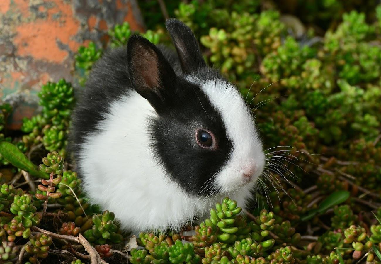 Cute Bunny Wallpaper Hd 10 Apk Download Android