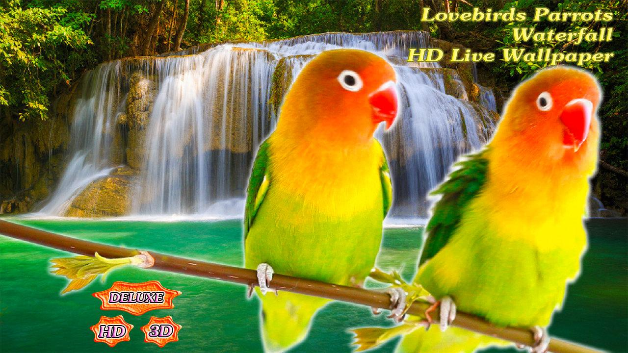 Beautiful Love Birds Hd Images Free Download
