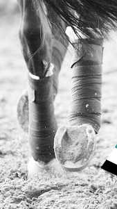 Equilab - Equestrian Tracker  screenshot 1