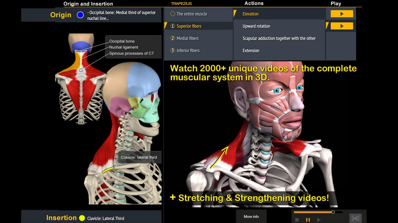 Muscle And Motion Anatomy 1423 Screenshot 2