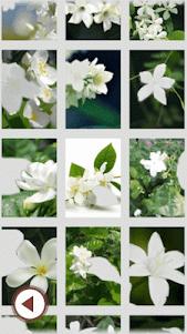 Jasmine Flowers Photo Frame 1.2 screenshot 1