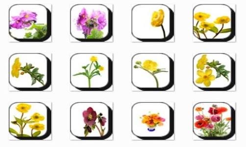Buttercup Flowers Onet Game 1.0 screenshot 2