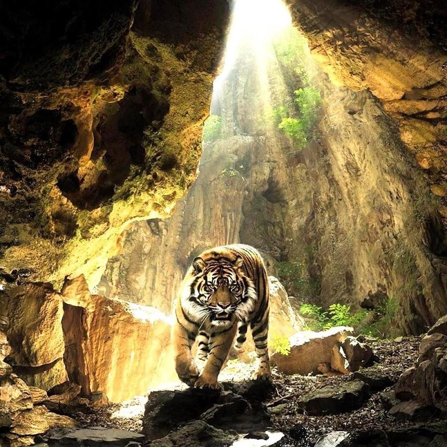 Tiger Live Wallpaper 110 Screenshot 1