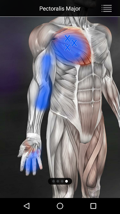 Muscle Trigger Point Anatomy 2.4.5 APK Download - Android Medical Apps