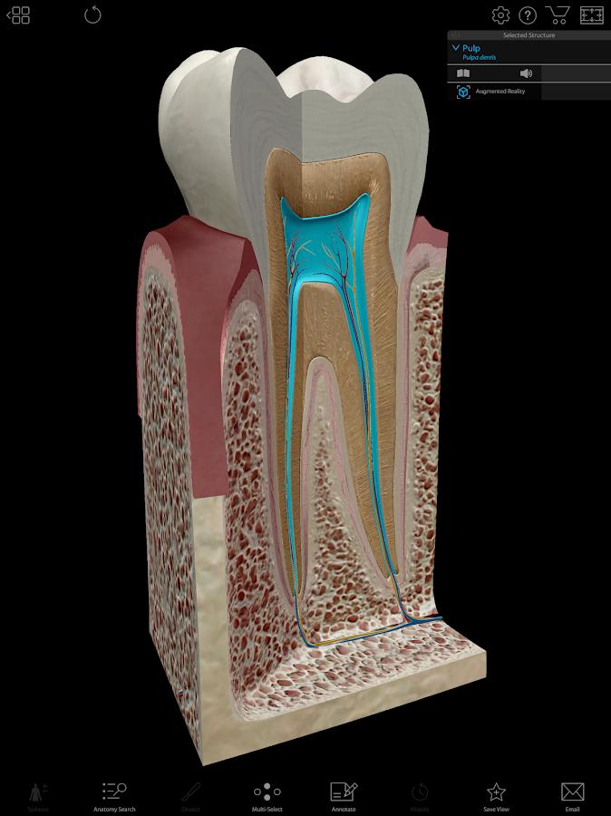 Human Anatomy Atlas 2019: Complete 3D Human Body 2019.0.30 APK ...