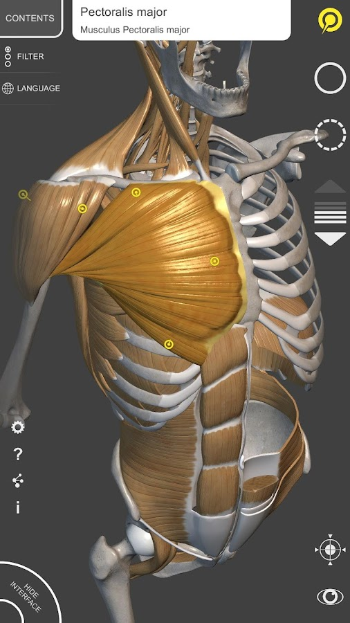 Anatomy For The Artist P 102 Apk Download Android Education Apps