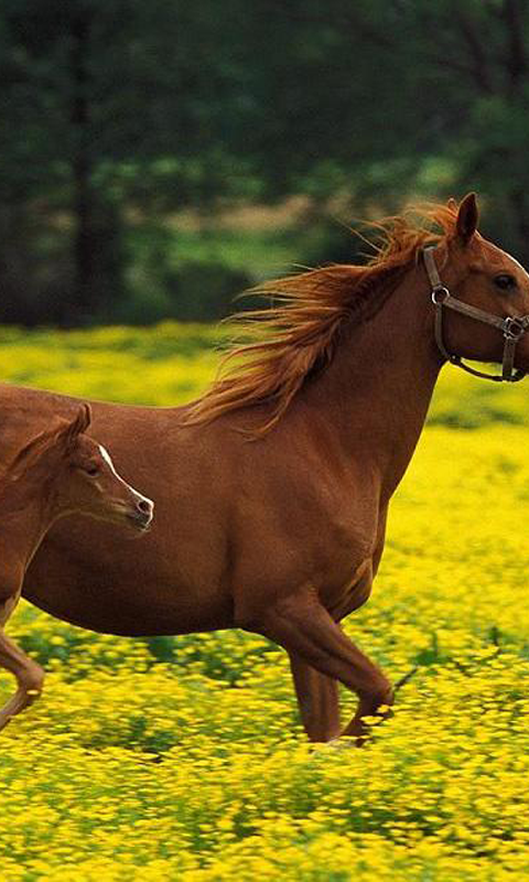 Cute Horse Wallpapers 26 Apk Download Android Personalization Apps
