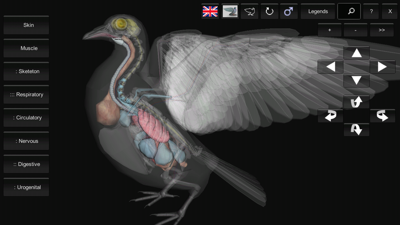 3D Bird Anatomy 1.10 APK Download - Android Education Apps