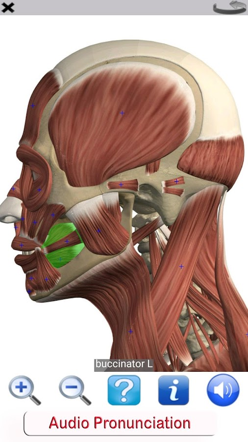Visual Anatomy Free APK Download - Android Medical Apps