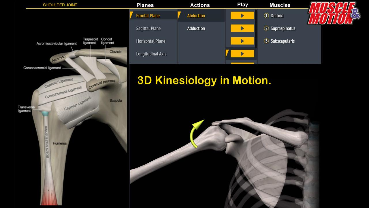 Muscle And Motion Anatomy 1423 Screenshot 8