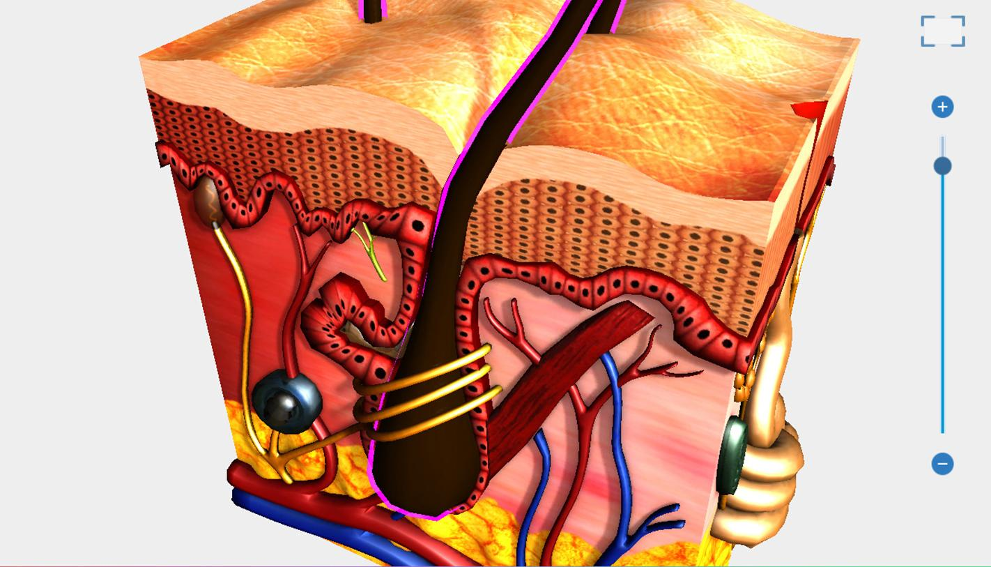 Human Body Anatomy 3d Free 22 Apk Download Android Education Apps
