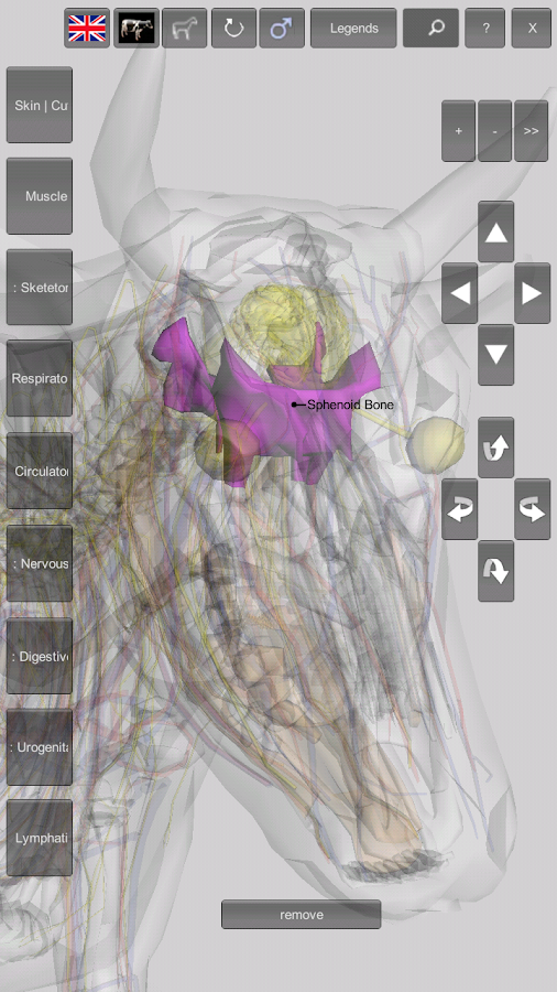 3D Bovine Anatomy 1.0 APK Download - Android Education Apps