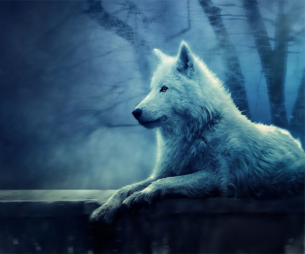 Ice Wolf 3D Live Wallpaper 1.0 APK Download