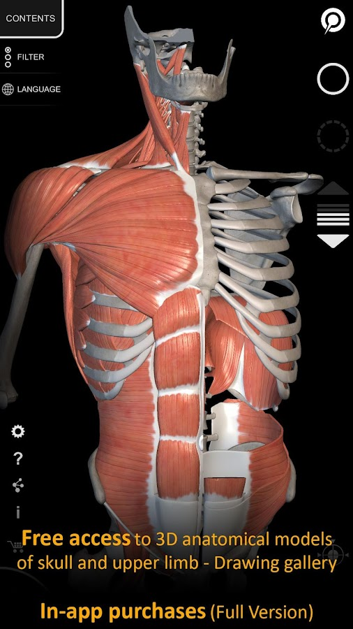 Muscle | Skeleton - 3D Atlas of Anatomy 1.7.2 APK + OBB (Data File ...