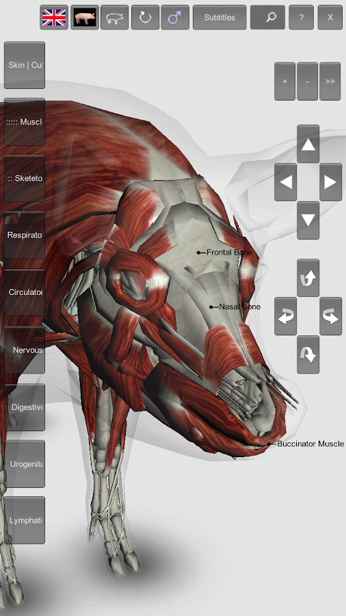 3D Pig Anatomy 1.0 APK Download - Android Education Apps