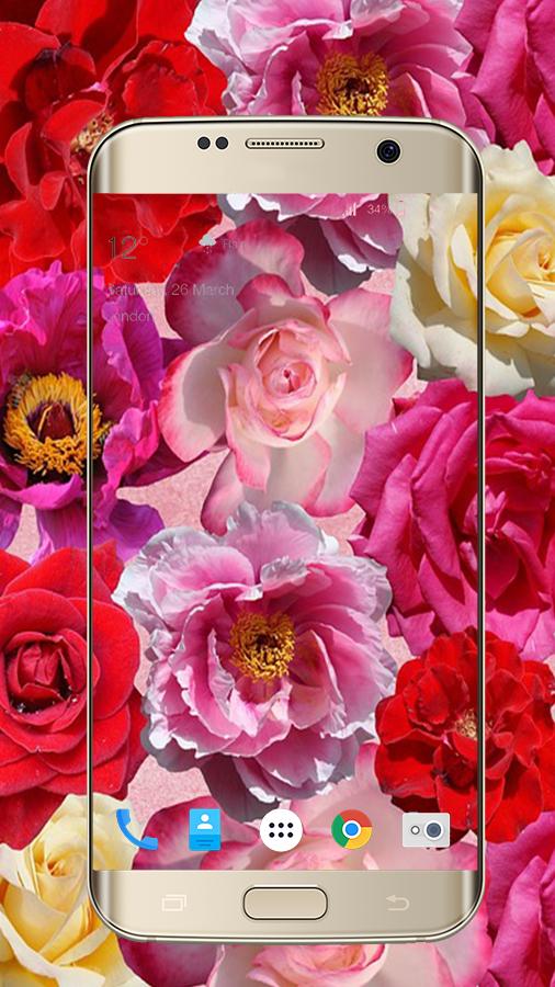 Rose Flower Wallpaper Live HD 11 Screenshot 3