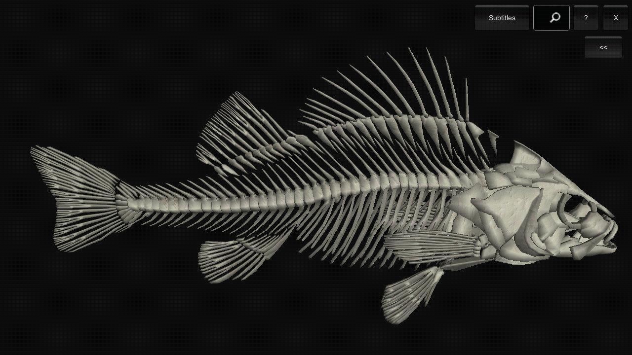 3d Fish Anatomy 101 Apk Download Android Education Apps