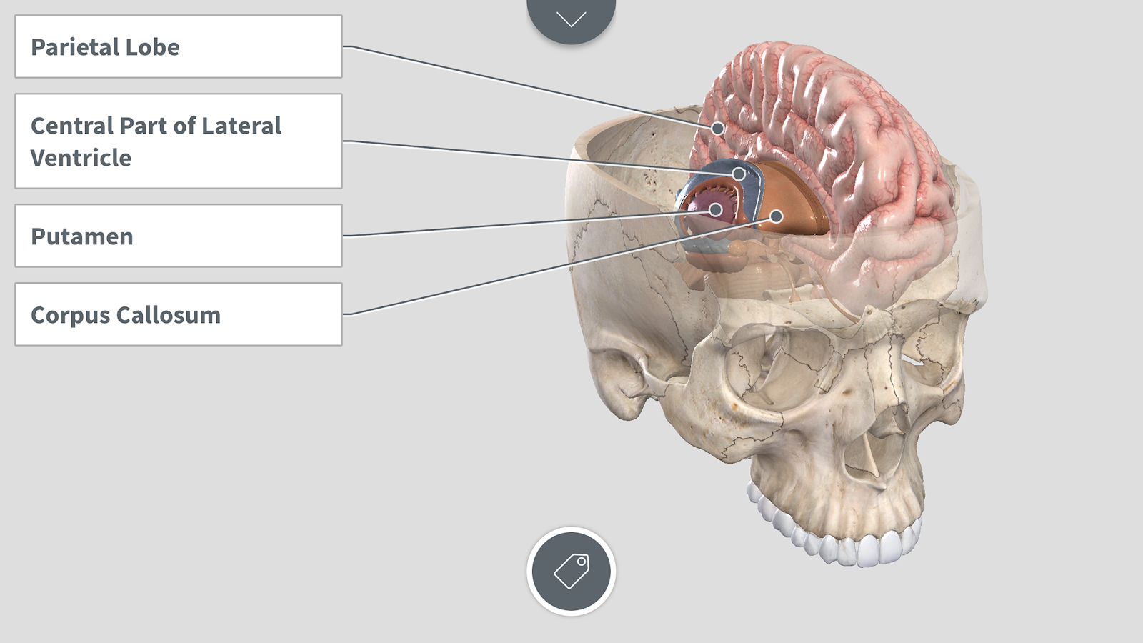Complete Anatomy for Android 1.0.0 APK + OBB (Data File) Download ...