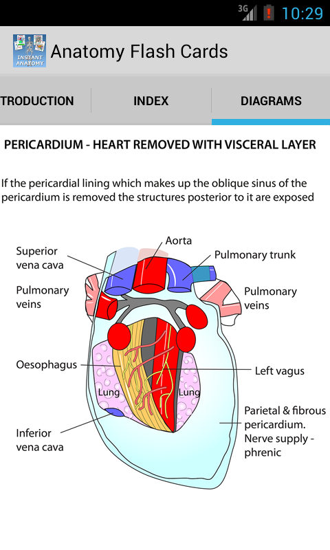 Anatomy Flash Cards 3.4 APK Download - Android Medical Apps