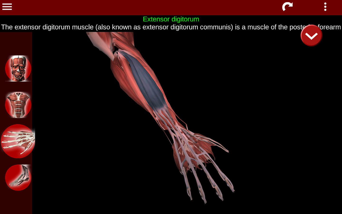 Muscular System 3D (anatomy) 2.0.3 APK Download - Android Medical Apps