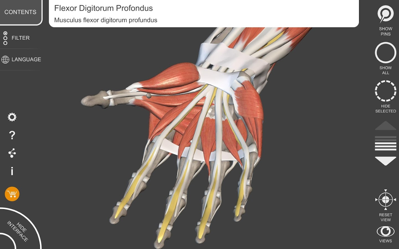 Muscle | Skeleton - 3D Atlas of Anatomy 1.7.5 APK + OBB (Data File ...