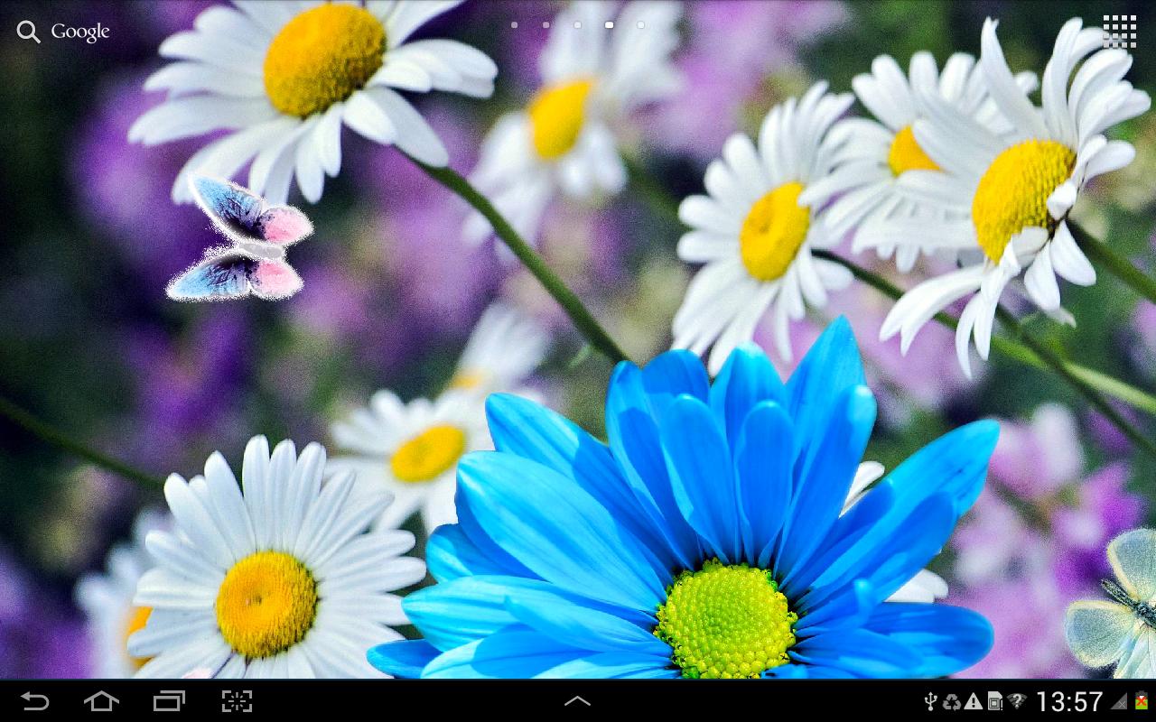 Daisies Flowers Live Wallpaper 106 Screenshot 7