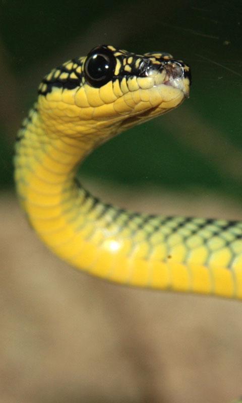 Snake Live Wallpaper : backgrounds hd