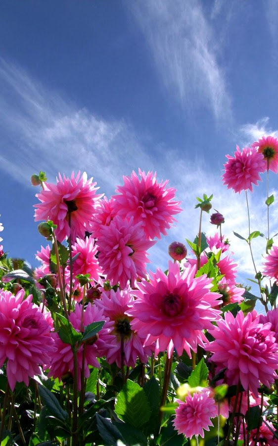 Garden Live Wallpaper 7 4 APK Download Android Personalization Apps