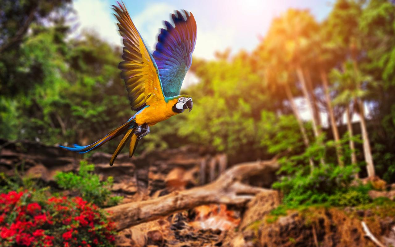 animals hd live wallpaper 6 0 apk download android personalization