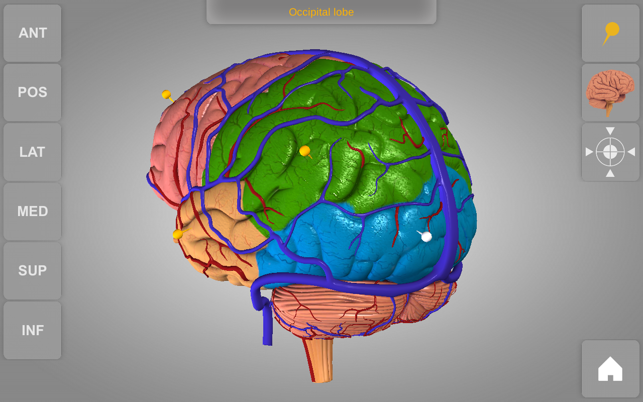 Brain 3D Anatomy 1.0.2 APK Download - Android Medical Apps