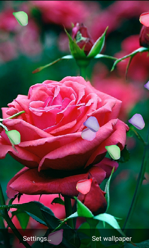 Red Rose Live Wallpaper 1 0 Apk Download Android Entertainment Apps