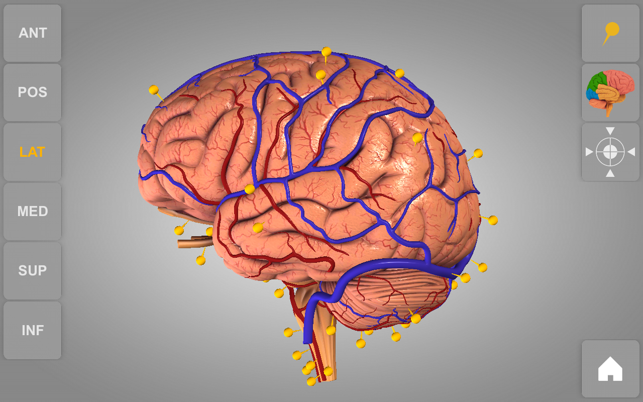 Brain 3d Anatomy Lite 103 Apk Download Android Medical Apps