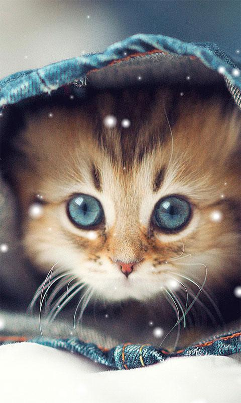 Cute Cat Wallpapers 1 0 Apk Download Android Personalization Apps