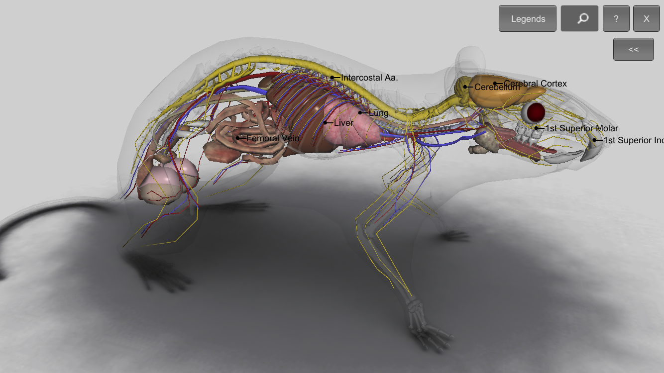 3d Rat Anatomy 121 Apk Download Android Education Apps