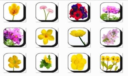 Buttercup Flowers Onet Game 1.0 screenshot 1