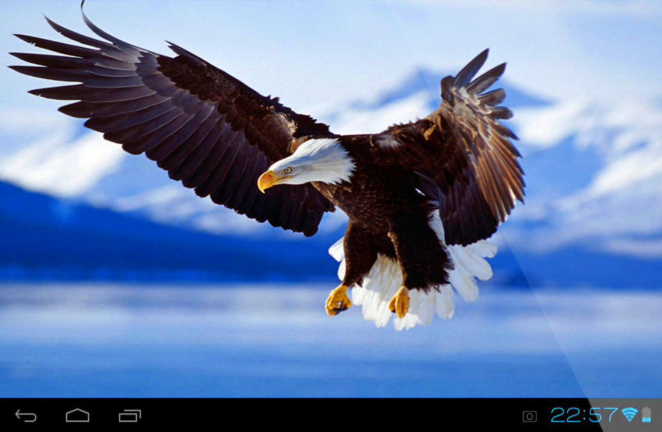 Eagle Live Wallpaper 10 Screenshot 1 2
