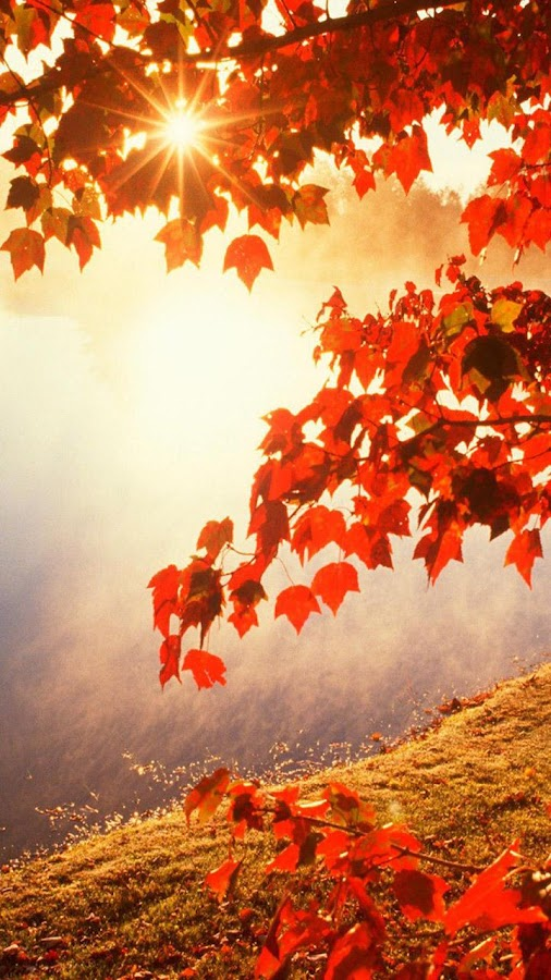 Autumn Wallpapers 114 Screenshot 1