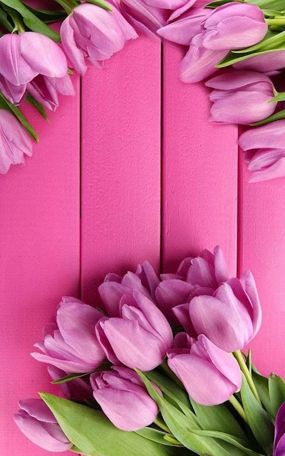 Hd pink tulips live wallpaper 11 apk download android hd pink tulips live wallpaper 11 screenshot 11 thecheapjerseys Image collections