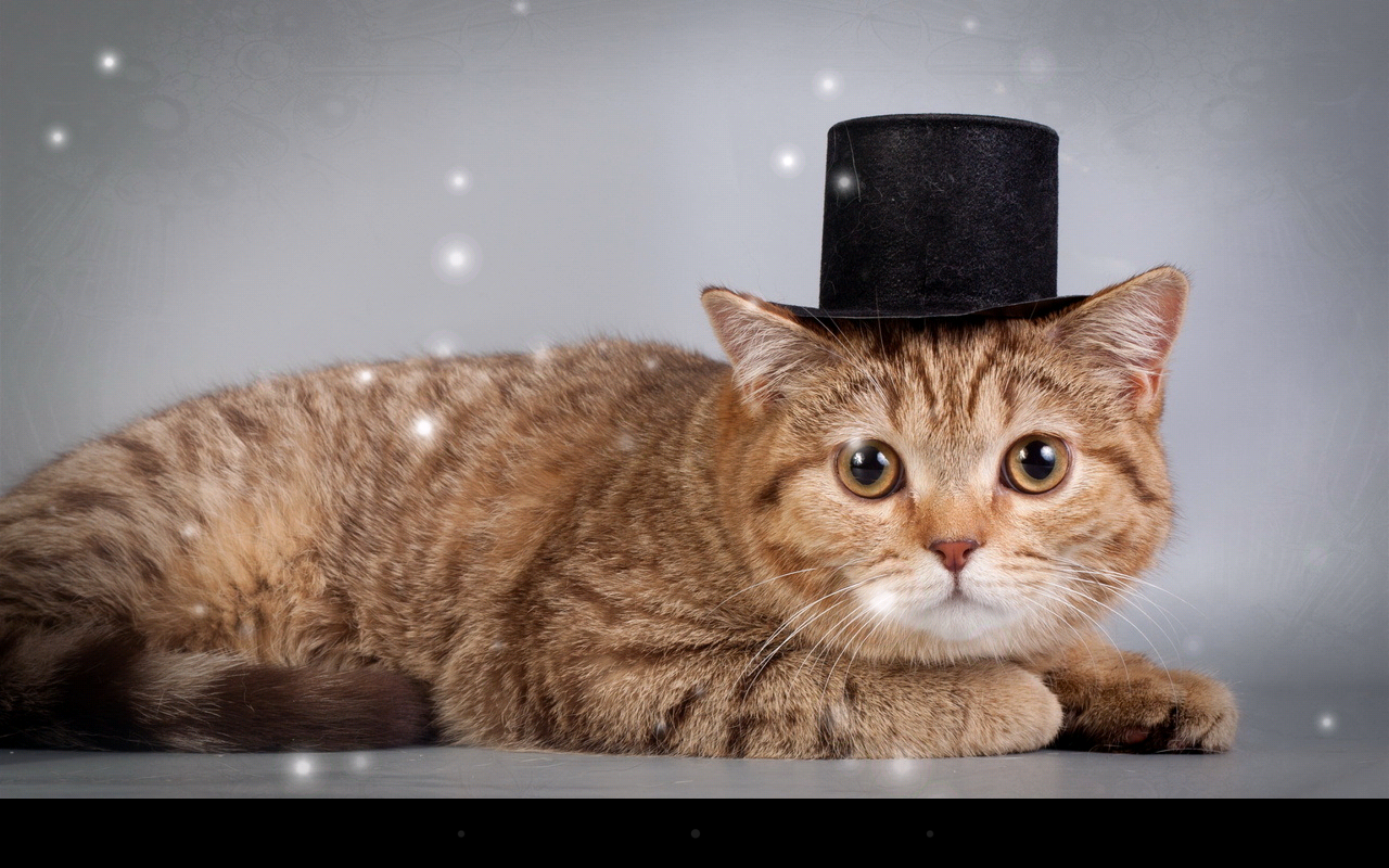 Note 5 Live Wallpapers 1 0 7 Apk Download: Fat Cat Live Wallpaper 1.0 APK Download
