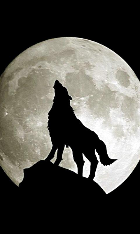 Wolf Wallpaper 11 Apk Download Android Personalization Apps