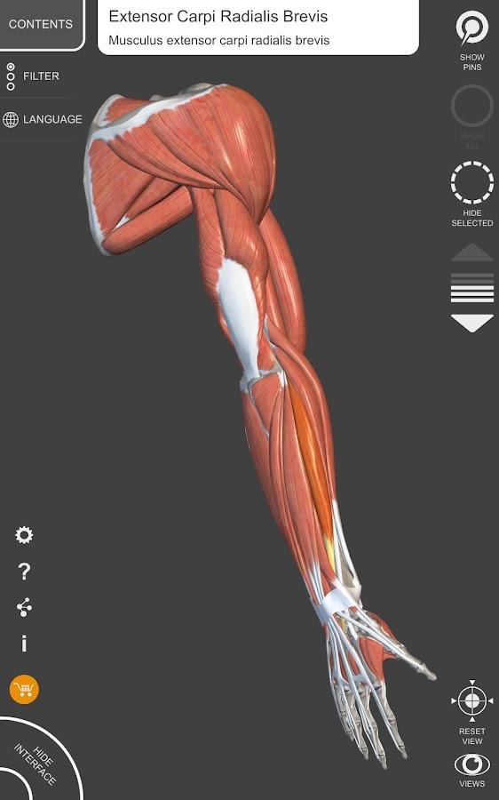 Muscle Skeleton 3d Atlas Of Anatomy 175 Apk Obb Data File