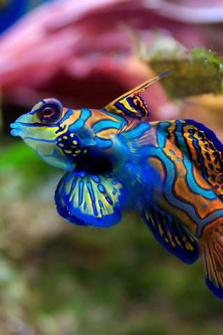 Download 880 Koleksi Wallpaper 3d Ikan Hias HD Terbaru