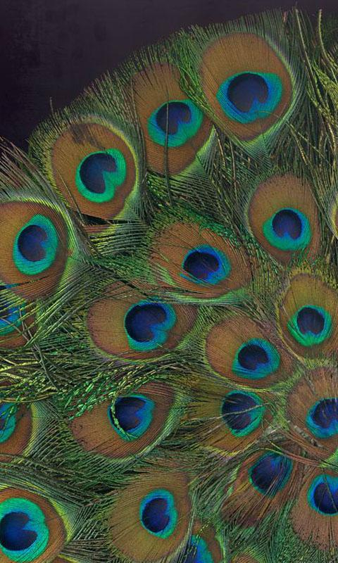 Hd Peacock Feather Wallpaper 13 Apk Download Android