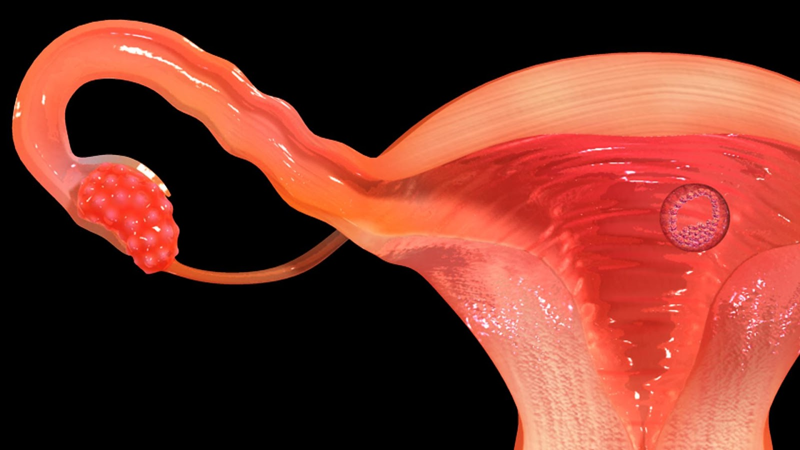 Vr Female Reproductive System 102 Apk Download Android Education