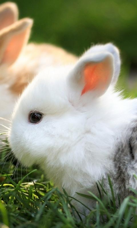 Cute Bunny Live Wallpaper 1002 Apk Download Android