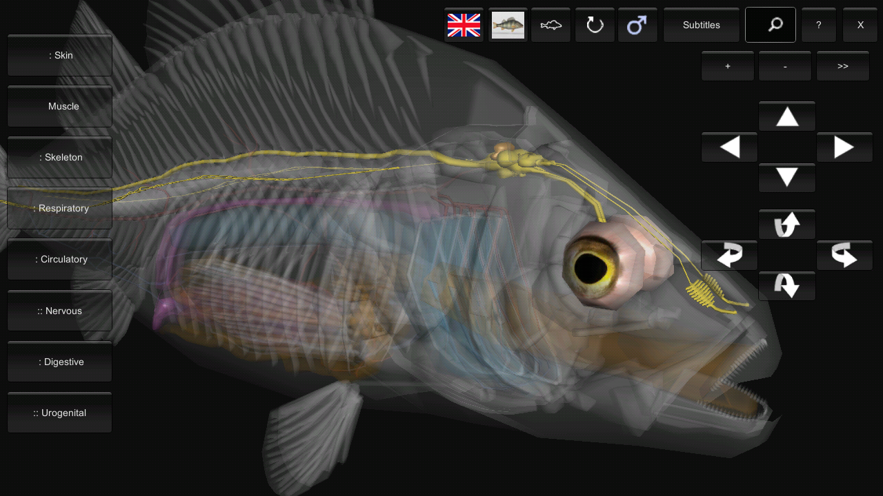 3D Fish Anatomy 1.01 APK Download - Android Education Apps