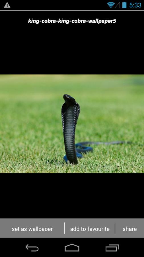 King Cobra Snake Wallpapers HD 130 Screenshot 3