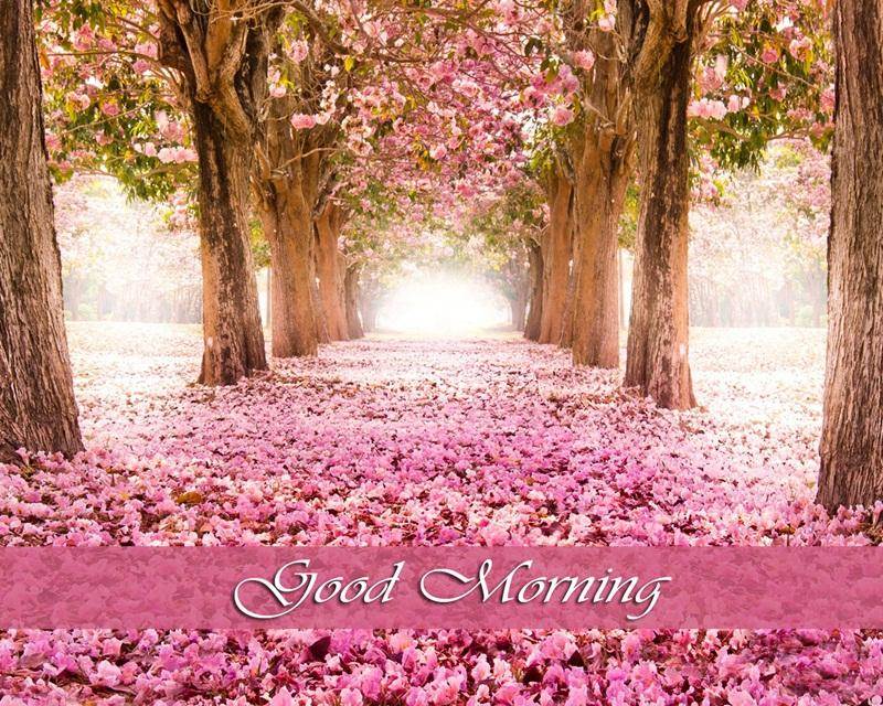 Good morning hd images 112 apk download android photography apps good morning hd images 112 screenshot 3 m4hsunfo