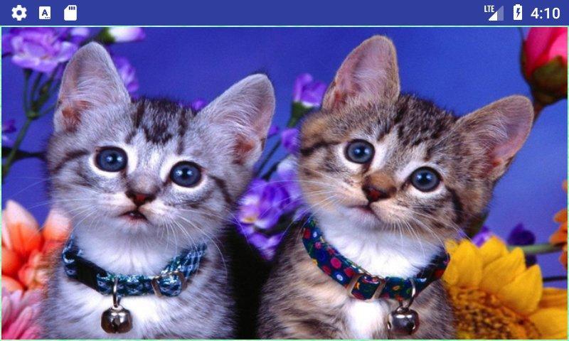 Beautiful Cats Wallpapers 120 Screenshot 1 2