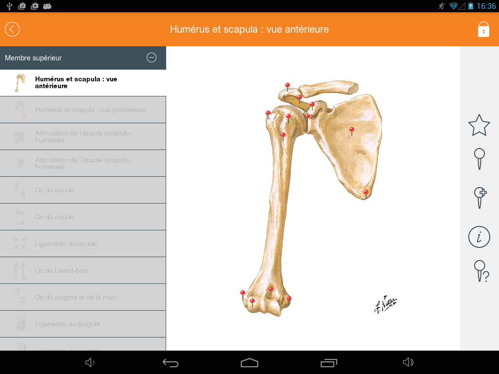 Mémofiches Anatomie Netter 1.5 APK Download - Android Medical Apps